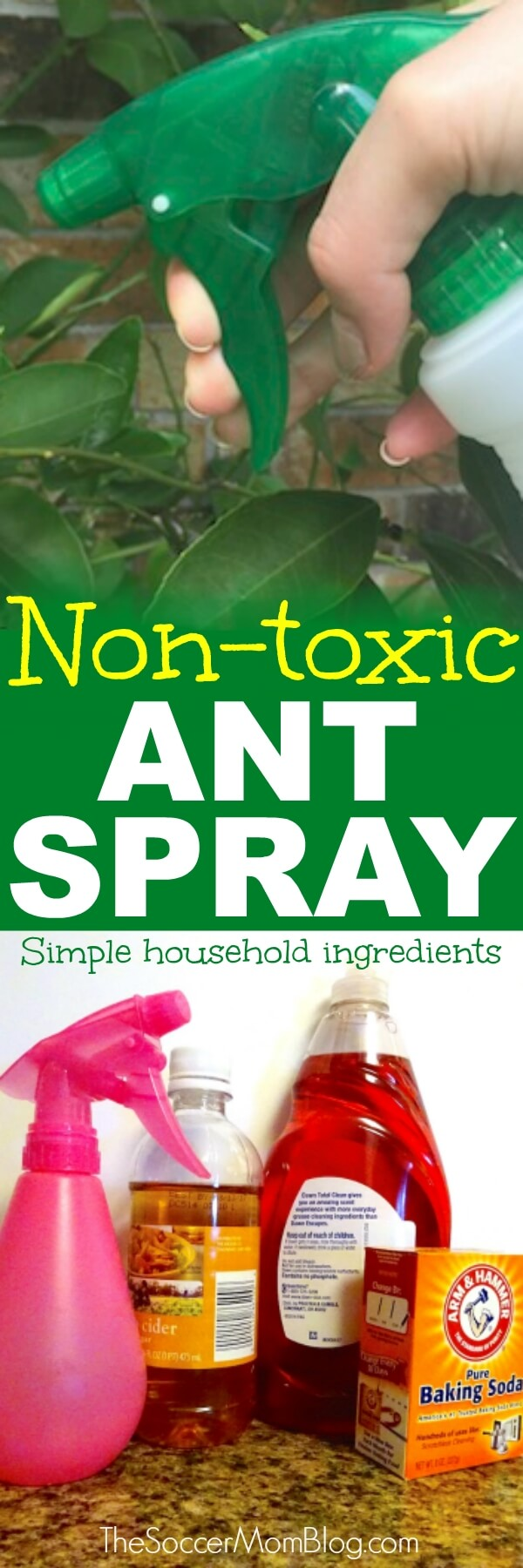The Best Homemade Ant Killer Kid Pet Safe The Soccer Mom Blog
