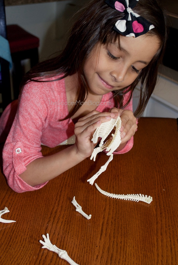 Build a model human and dinosaur skeleton and create a skeleton observation notebook. A fun hands-on science activity for elementary kids.