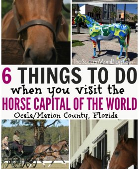 6 Must-do Activities in the Horse Capital of the World