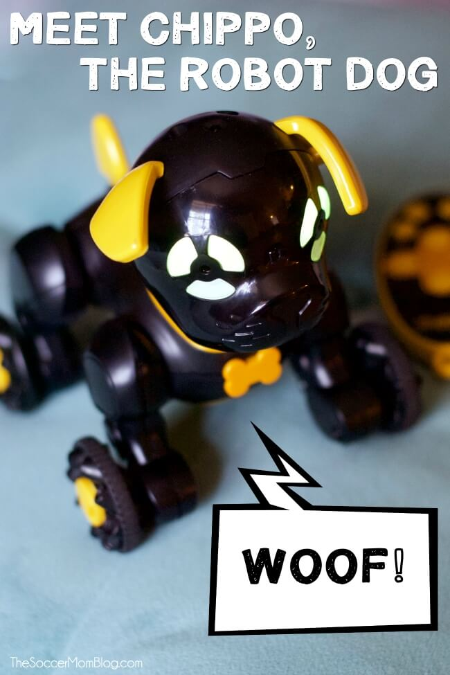 Want to offer you kids the fun of owning a pet, without all the work for mom and dad? Why a Chippies robot dog is the perfect way to go!