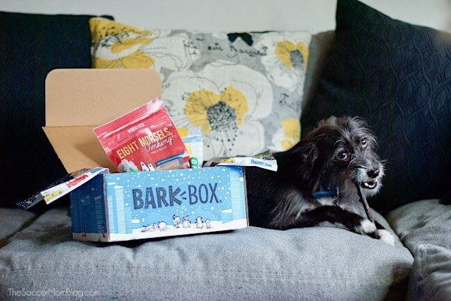 Our BarkBox Review - How to Make Any Dog Your Best Friend