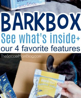 Our BarkBox Review – How to Make Any Dog Your Best Friend