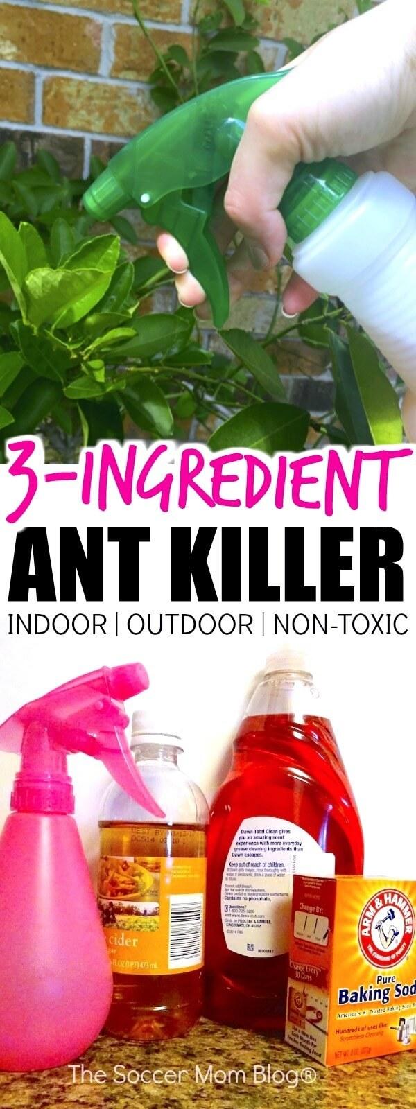 the best homemade ant killer (kid & pet safe) - the soccer mom blog