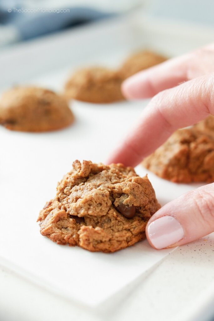 picking up a chocolate chip cookie from baking sheet