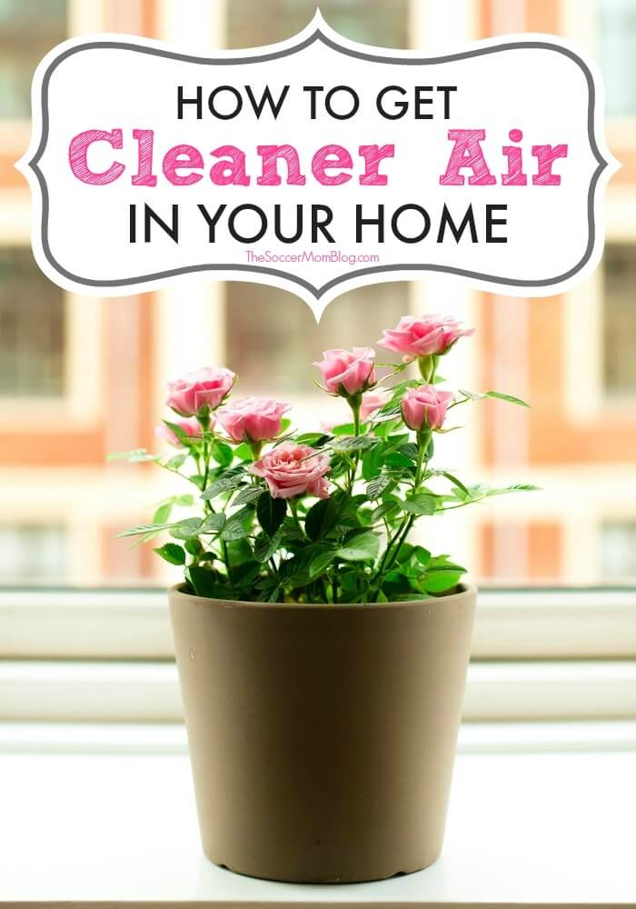 9 surprisingly simple ways to improve indoor air quality in your house during allergy season.