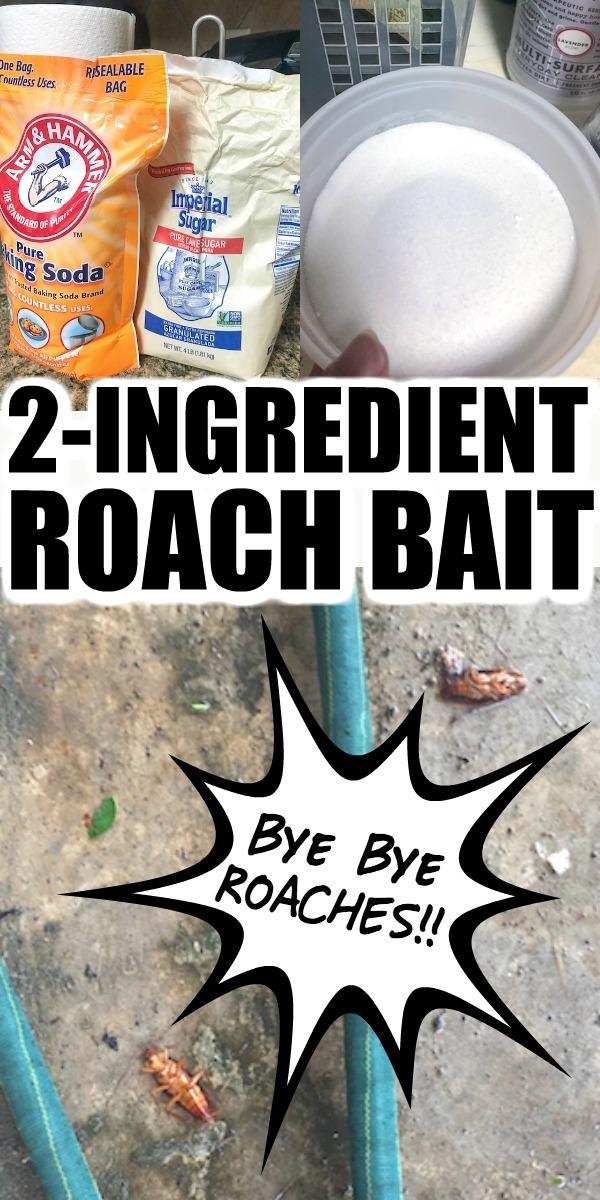 DIY cockroach bait recipe