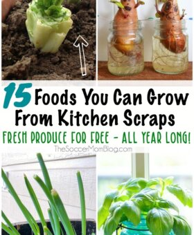 15 Foods You Can Regrow from Scraps