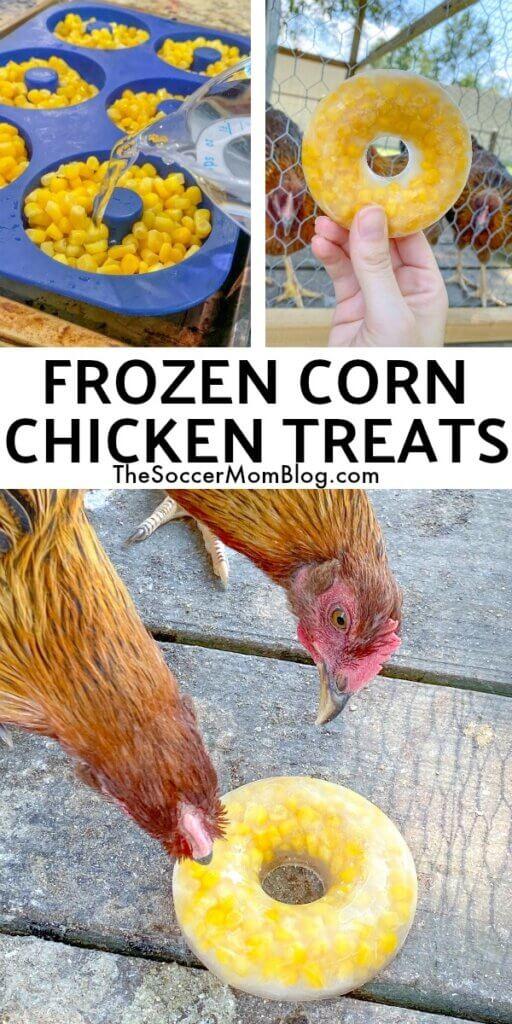 Frozen Corn Treats for Chickens