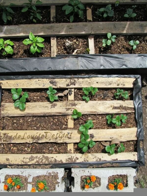 using wooden pallets to divide garden rows