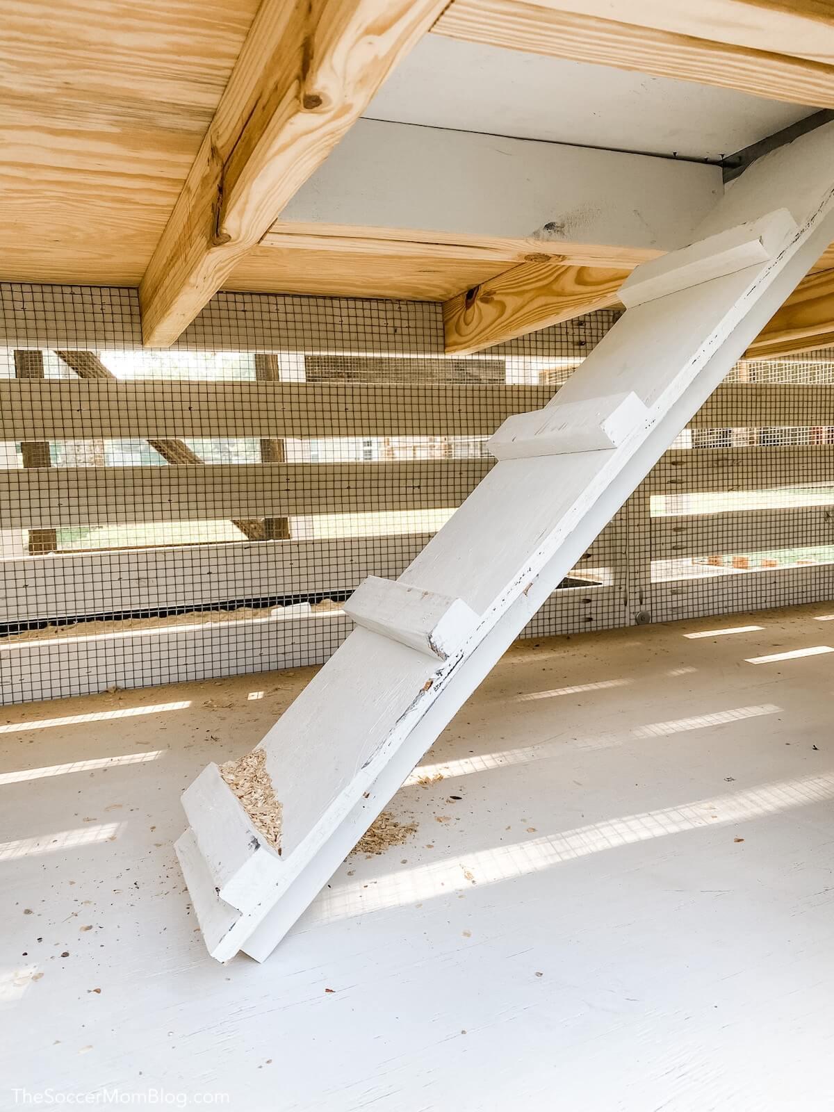trap door ramp inside chicken coop